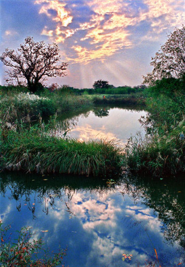 西溪国家湿地公园-浙江省·杭州市·西湖区-西溪湿地水横纵错,环境清幽,水道如巷、河汊如网,鱼塘栉比、诸岛棋布,每个季节都有不同景色,值得一去的! 适合拍摄古风,汉